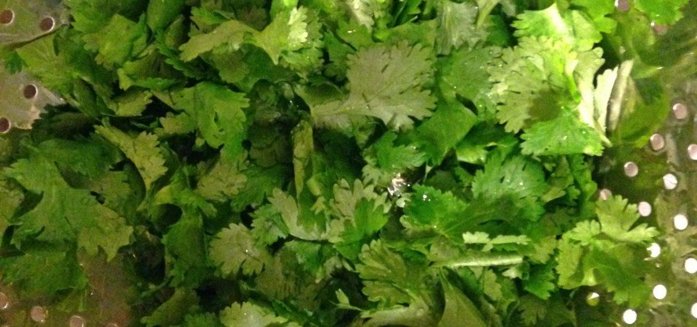 cilantro baby food strainer