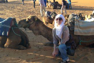 Sahara desert camel