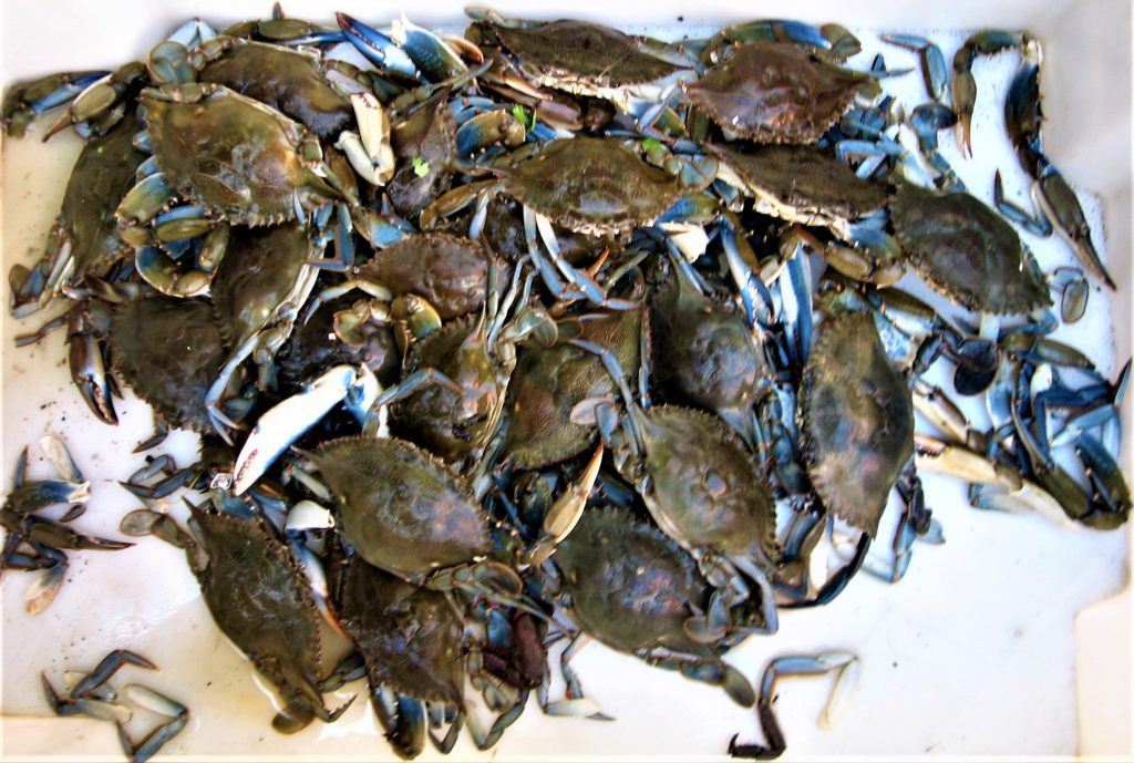 More Crabs!